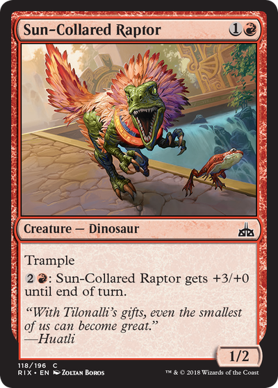 Sun_Collared_Raptor_EN_HRR_copy